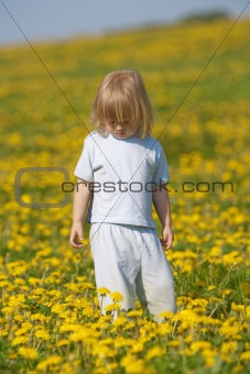 boy with long blond hair standing in a dandelion field