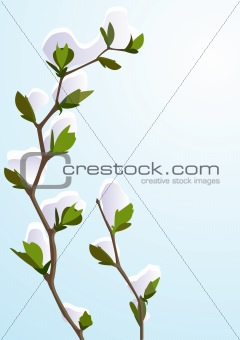 Blue winter background with snow-covered branch and space for te