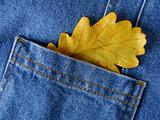 leaf in pocket