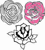 fancy rose illustration