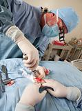 Veterinarian doing knee surgery on small dog