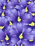 Violets garden