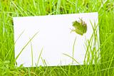 White Sign Amongst Grass with Tree Frog