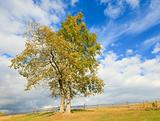 Two lonely autumn trees on sky background.