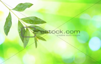 Beautiful green leaves with green background in spring
