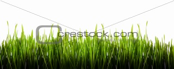 Green grass panorama isolated on white background