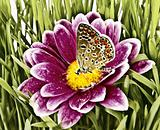 Butterfly on flower with grass