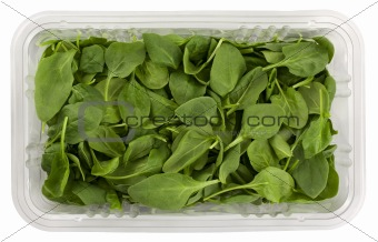 green baby spinach in a clear box