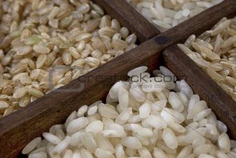 four rice grains abstract with focus on arborio