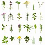 Herb Leaf and Flower Collection