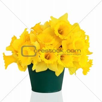 Daffodil Flower Beauty