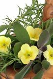 Primrose Flowers and Herbs