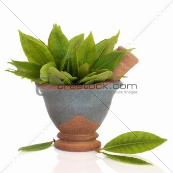 Bay Leaf Herb