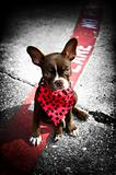 Image of a cute puppy with red bandana