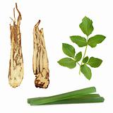 Angelica Herb Products