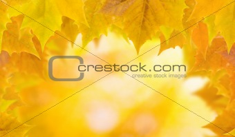 Beautiful leaves in autumn