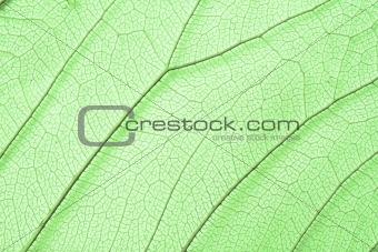 Green skeleton leaf structure