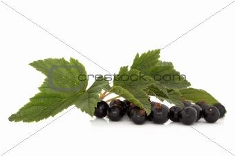 Blackcurrant Fruit