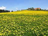 Scenic meadow in Emmental region, Switzerland