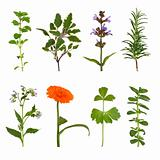 Herb Leaf and Flower Selection