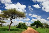 Tarangire national park