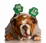 kiss me i'm irish - english bulldog wearing green headband