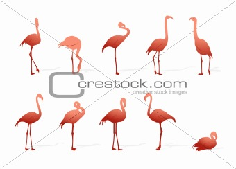 flamingo collection