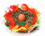 easter egg in nest isolated on white background