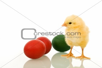 Little fluffy Eastern chicken with dyed eggs