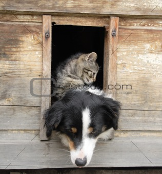 cat and dog at home