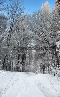 footpath in winter forest