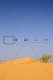 on the top of sand dune