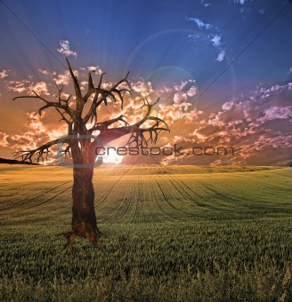 Old tree in sunset landscape
