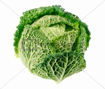 single green cabbage fruit  isolated on white
