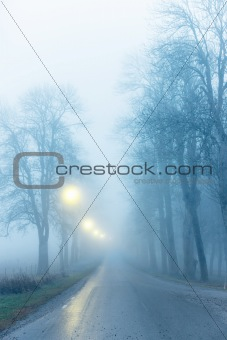 Avenue in fog