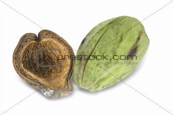 Araujia sericifera fruit