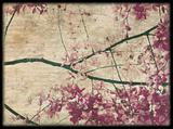 Pink and purple blossom background