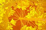 Yellow tapioca on orange background
