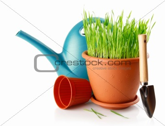 green grass in the pot with shovel tool