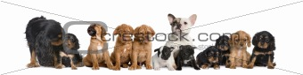 Group of dogs sitting in front of white background, studio shot