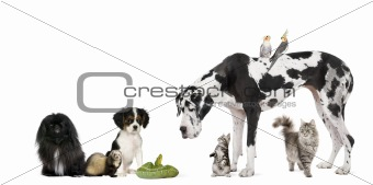 Group of pets on a white background