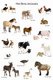 Collage of farm animals in English in front of white background,