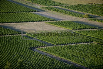 Aerial view of vineyards