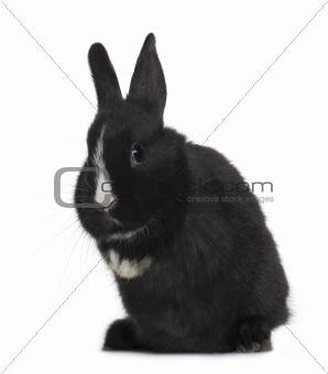 Portrait of Black baby rabbit sitting in front of white background, studio shot
