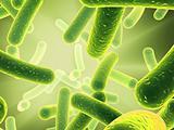 bacteria - close up