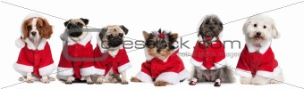 Group of dogs dressed as Santa Claus in front of white backgroun