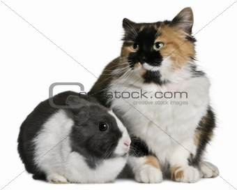 Cat and rabbit sitting in front of white background