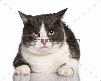Crossbreed cat, 4 years old, sitting in front of white background