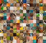 Patchwork of 196 animals and human skin