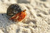 Hermit Crab on a beach
